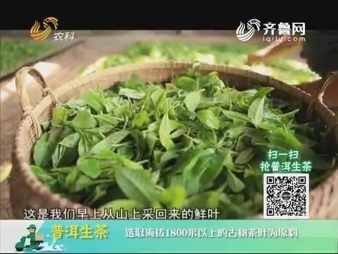 20180721《中国原产递》:普洱生茶