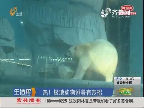 热!极地动物避暑有妙招