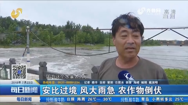 莒南:安比过境 风大雨急 农作物倒伏