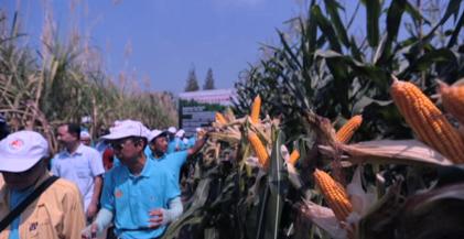 """""""一带一路""""上的山东农业——印尼行:合作共赢的阳光大道"""