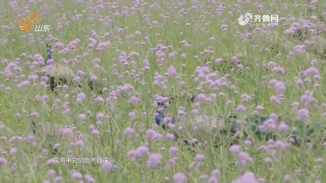 20180726《纵横四海》:古城台儿庄 一个寻梦的地方