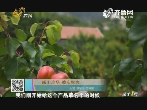 崂山珍品 飨实蜜杏