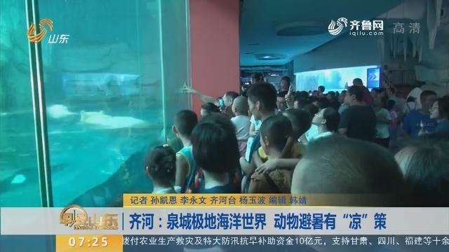 """齐河:泉城极地海洋世界 动物避暑有""""凉""""策"""