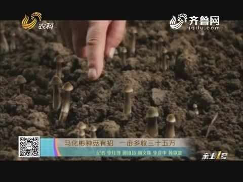 马化彬种菇有招 一亩多收三十五万