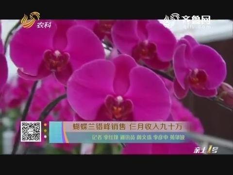 蝴蝶兰错峰销售 仨月收入九十万