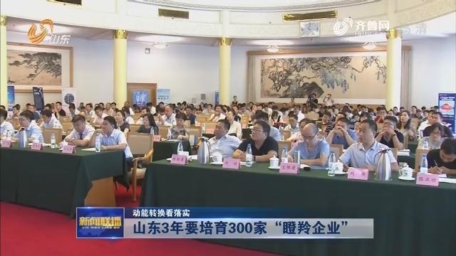 """【动能转换看落实】山东3年要培育300家""""瞪羚企业"""""""