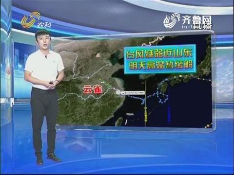 看天气:台风减弱近山东 明天高温暂缓解