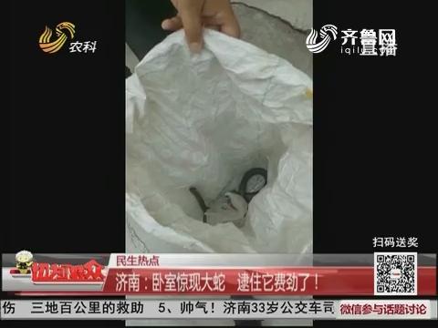 【民生热点】济南:卧室惊现大蛇 逮住它费劲了!
