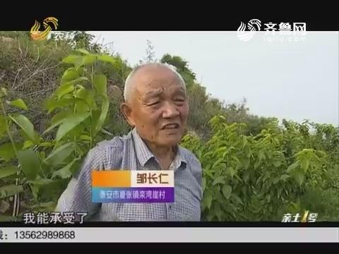 【乡村振兴 有我站长】邹长仁:开山种樱桃的省劳模