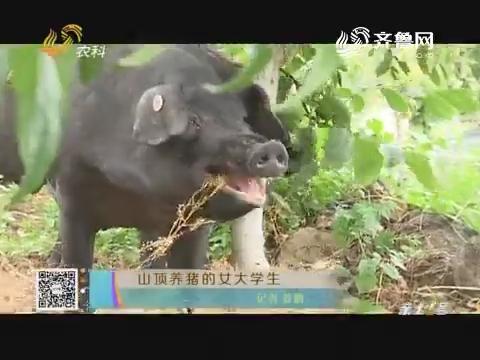 山顶养猪的女大学生