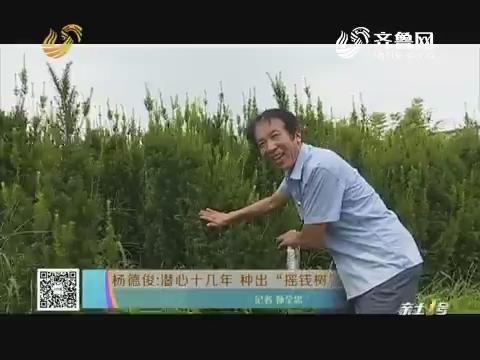 """杨德俊:潜心十几年 种出""""摇钱树"""""""