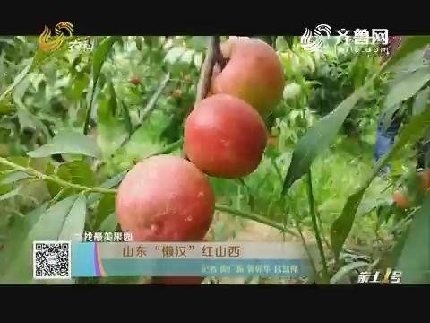 """寻找最美果园:山东""""懒汉""""红山西"""