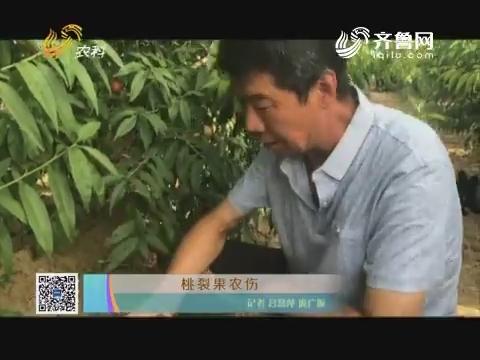桃裂果农伤