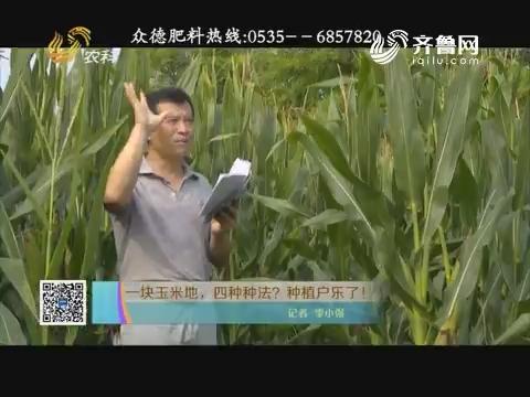 一块玉米地,四种种法?种植户乐了!