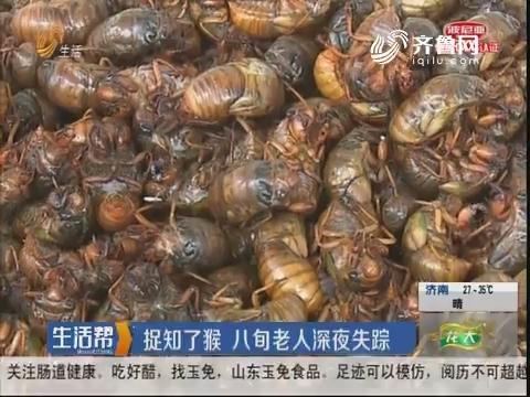淄博:捉知了猴 八旬老人深夜失踪