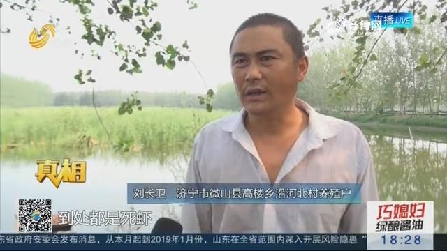 【真相】济宁:育苗虾突然大量死亡 疑是用药惹的祸