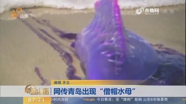 """网传青岛出现""""僧帽水母"""""""