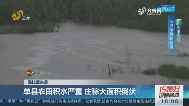 【温比亚来袭】闪电连线:单县农田积水严重 庄稼大面积倒伏