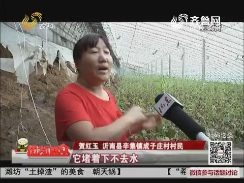 【民生热点】是天灾更是人祸 沂南50多个蔬菜大棚被毁