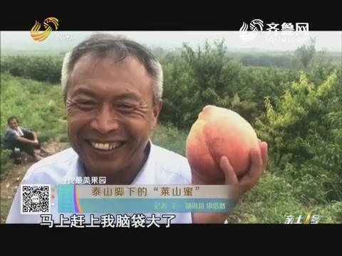 """【寻找最美果园】泰山脚下的""""莱山蜜"""""""
