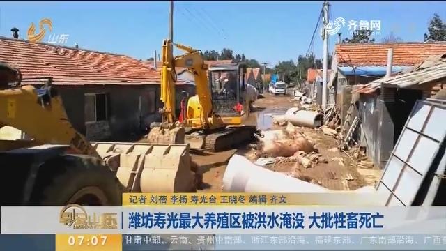 潍坊寿光最大养殖区被洪水淹没 大批牲畜死亡