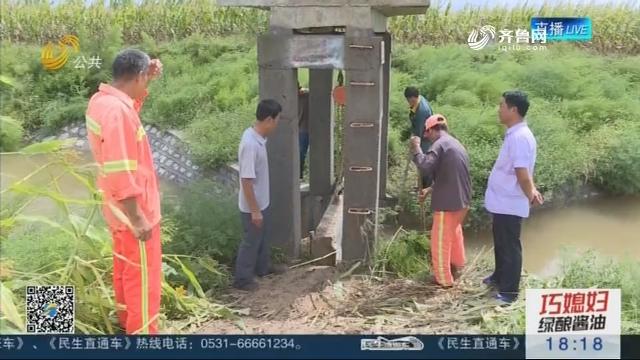【抢险救灾 众志成城】东营:农田积水基本排完 企业陆续恢复生产