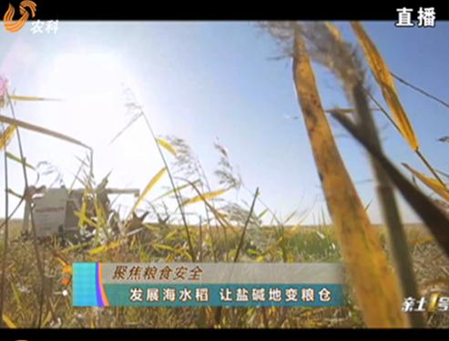 20180826《农科直播间》:聚焦粮食安全—发展海水稻 让盐碱地变粮仓