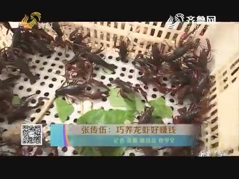张传伍:巧养龙虾好赚钱