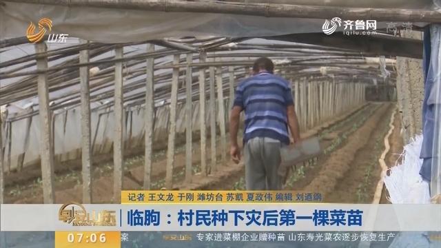 临朐:村民种下灾后第一棵菜苗