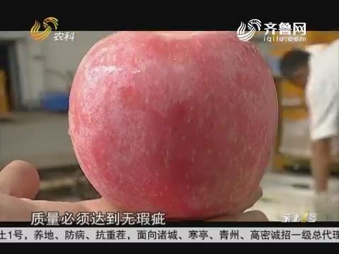 【一带一路上的新农人】宫照月:把苹果出口到东南亚