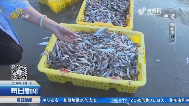 【4G直播】开海第一天 皮皮虾螃蟹爬满仓