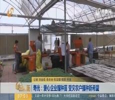 寿光:爱心企业赠种苗 受灾农户播种新希望
