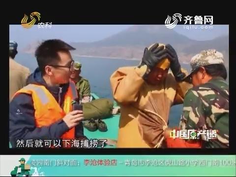 20180904《中国原产递》:小钦岛海参