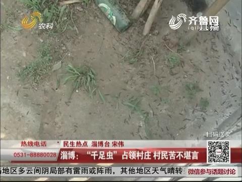 """【民生热点】淄博:""""千足虫""""占领村庄 村民苦不堪言"""
