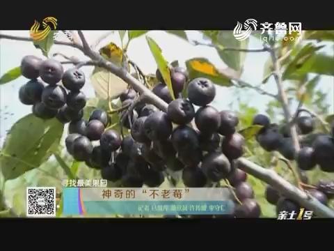 """【寻找最美果园】神奇的""""不老莓"""""""