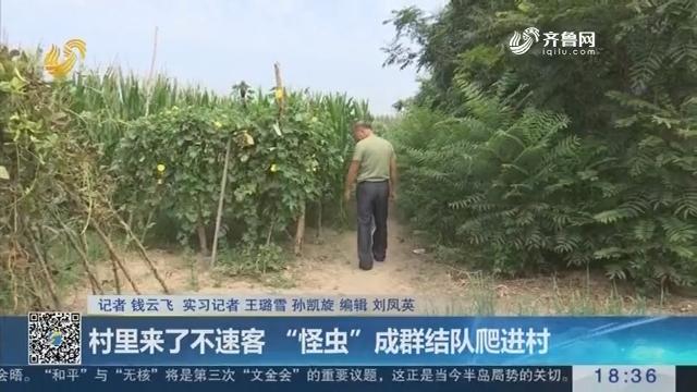 """淄博:村里来了不速客 """"怪虫""""成群结队爬进村"""