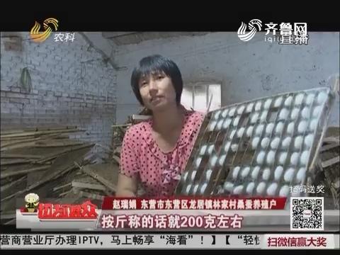 【丰收大中国】东营:林家村的蚕茧丰收了