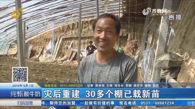 寿光:灾后重建 30多个棚已载新苗