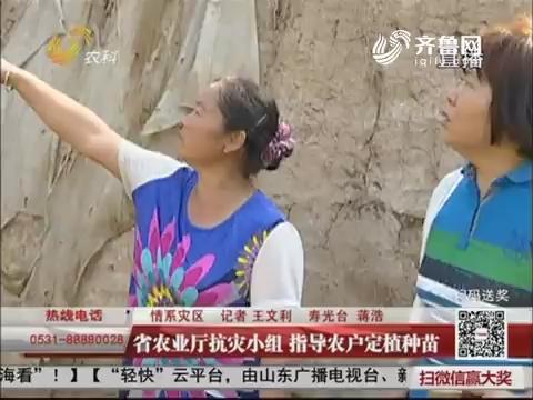 【情系灾区】寿光:省农业厅抗灾小组 指导农户定植种苗
