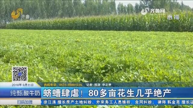济阳:蛴螬肆虐!80多亩花生几乎绝产