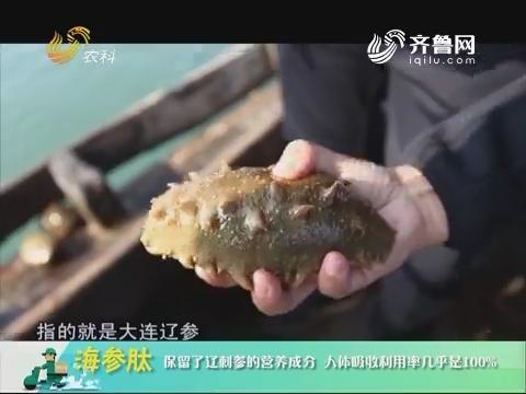 20180911《中国原产递》:海参肽