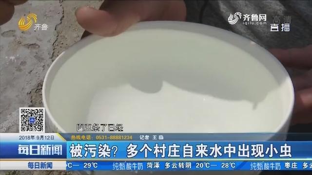禹城:被污染?多个村庄自来水中出现小虫