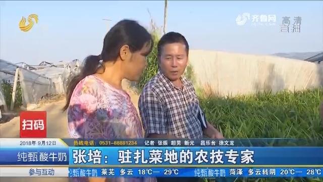张培:驻扎菜地的农技专家