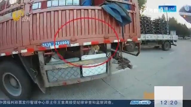 """货车防护装置为何成""""狗窝"""" ?"""