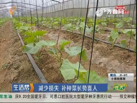 潍坊:减少损失 补种菜长势喜人