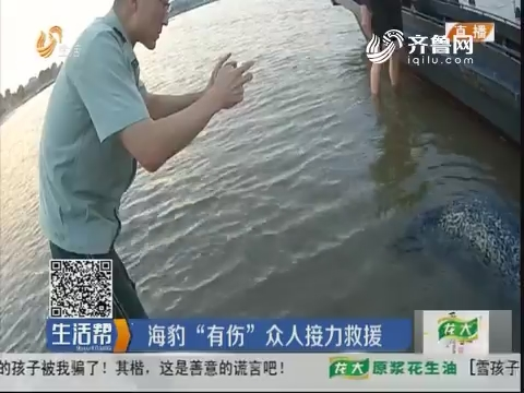 烟台:主动靠近渔船 海豹要干啥?