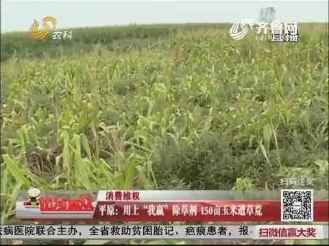 """【消费维权】平原:用上""""我赢""""除草剂 150亩玉米遭草荒"""