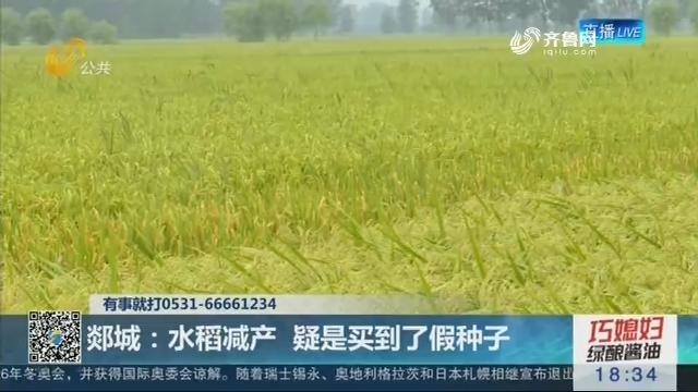 郯城:水稻减产 疑是买到了假种子