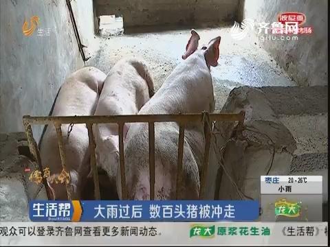 """潍坊:村书记为保下游村庄 将""""祸水""""引向自家养鸡场"""