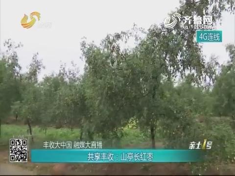 【丰收大中国 融媒大直播】共享丰收:山亭长红枣